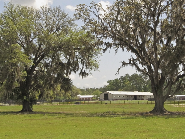 Horseback Riding Stables in Brunswick, GA