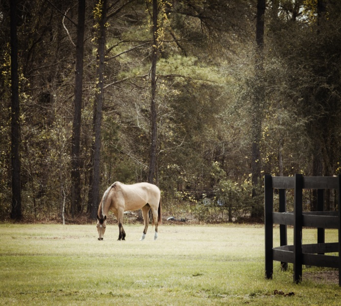 Horse at Stable in Brunswick, GA