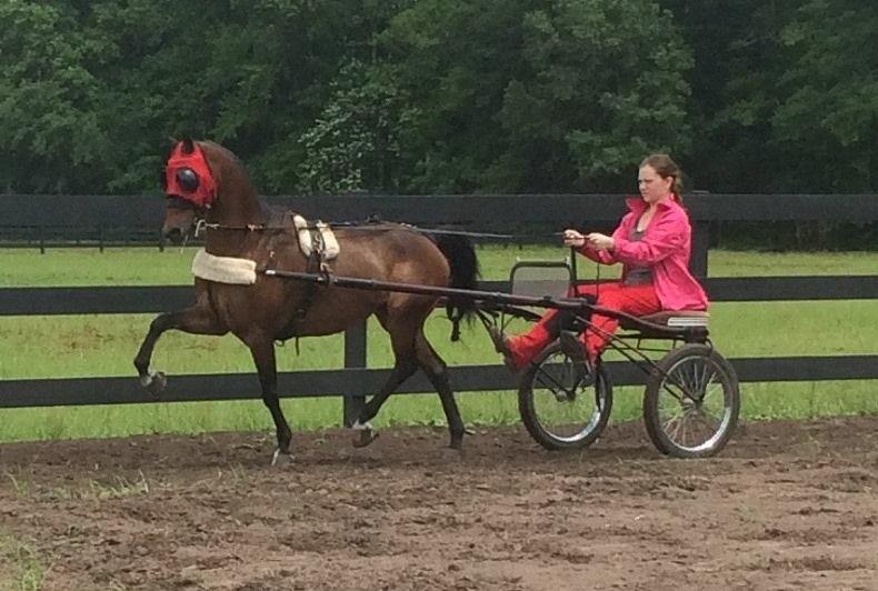 Private Horse Riding Lessons in Brunswick GA