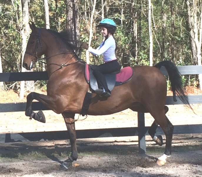 Toddler & Childrens Horse Riding Lessons in Brunswick GA