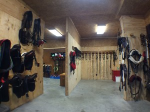 Pony & Horseback Riding Gear