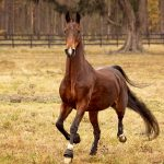 Horseback Riding Camps & Lessons near Jacksonville, FL